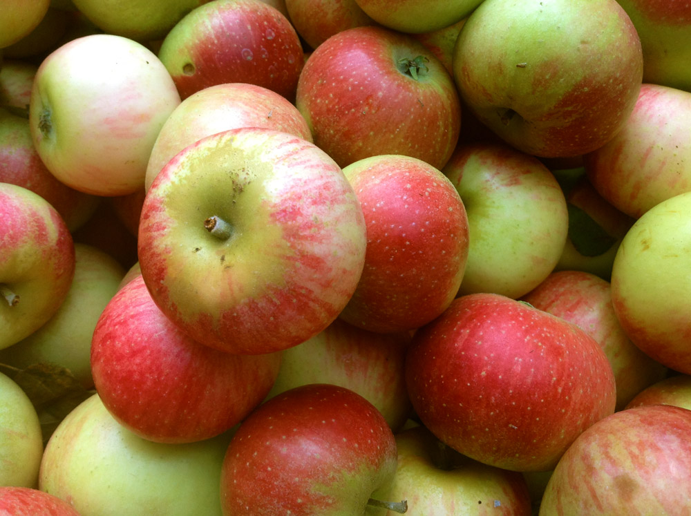 Apples - Nichols Farm & Orchard