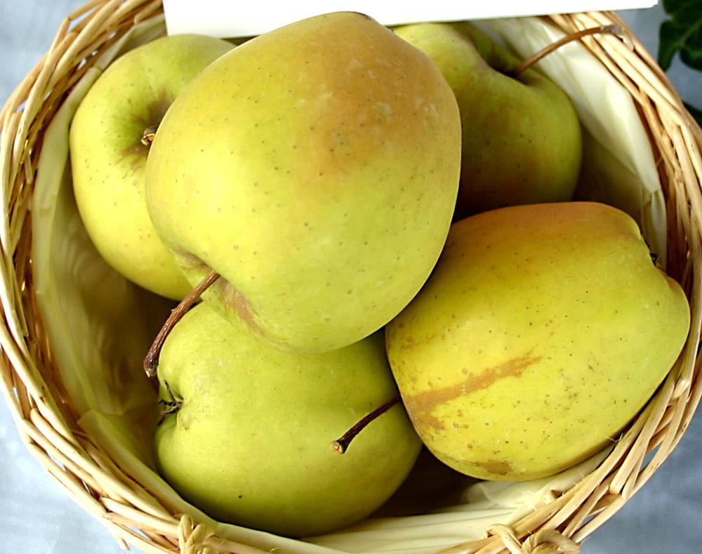 apples nichols farm orchard. Black Bedroom Furniture Sets. Home Design Ideas